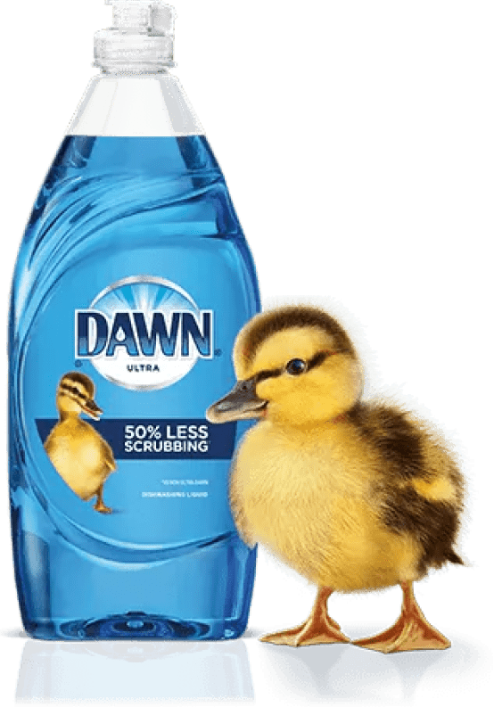 duck and bottle